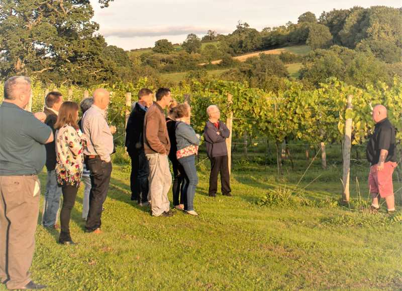 Guests taking a guided tour of one of White Castle's vineyards